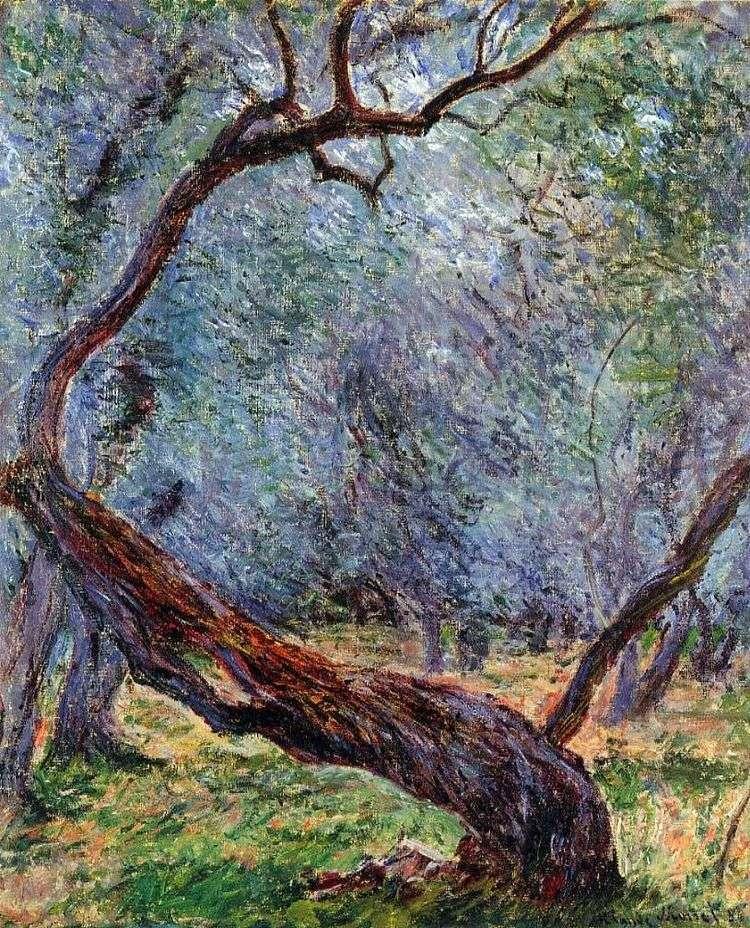 Штудия оливковых деревьев   Клод Моне
