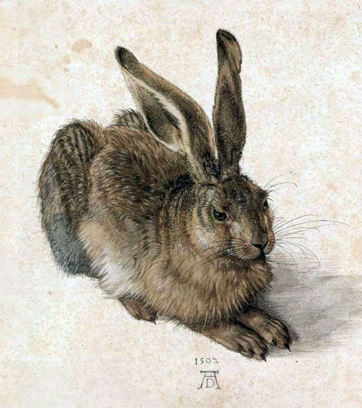 Молодой заяц   Альбрехт Дюрер