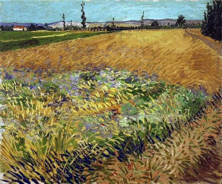 Пшеничное поле и предгорье Старых Альп на заднем плане   Винсент Ван Гог
