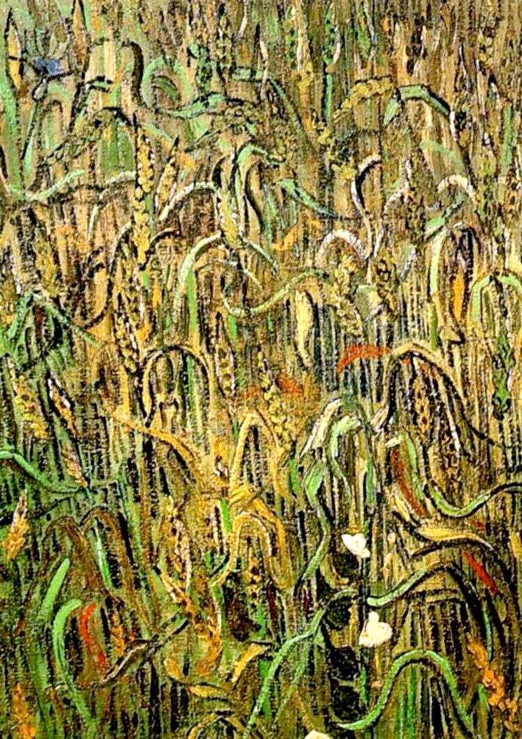 Пшеничные колосья   Винсент Ван Гог