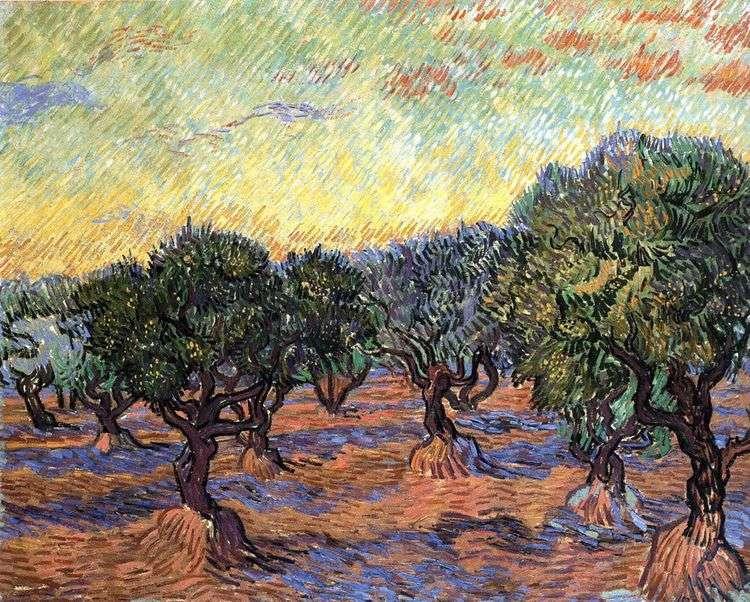 Роща олив   Винсент Ван Гог