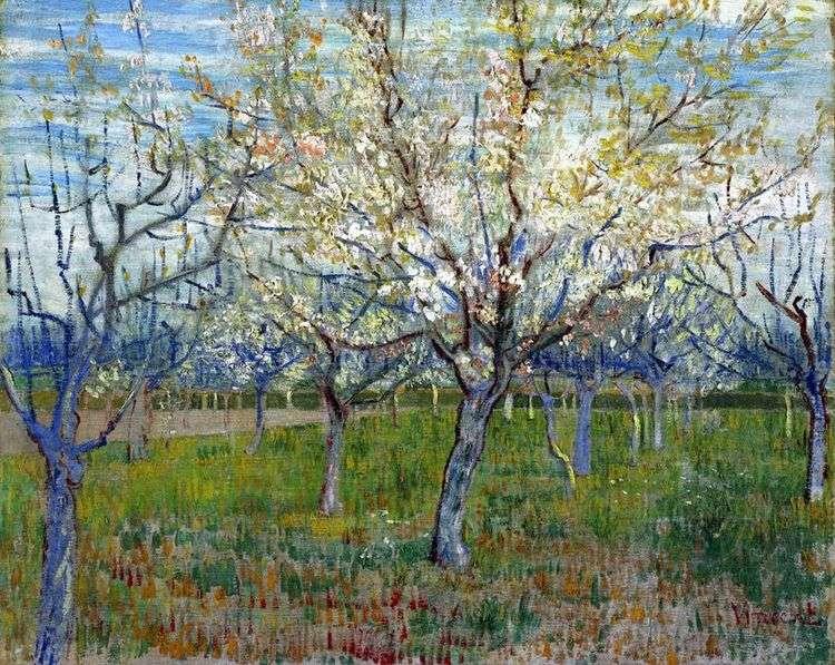 Фруктовый сад с цветущими абрикосами   Винсент Ван Гог