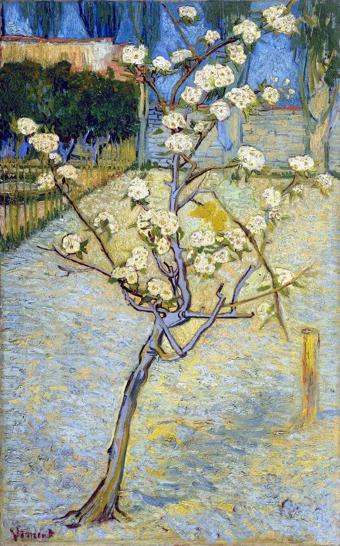 Цветущая груша   Винсент Ван Гог