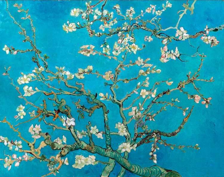 Цветущие ветки миндаля   Винсент Ван Гог