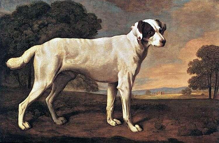 Портрет собаки в Гэттон парке   Джордж Стаббс